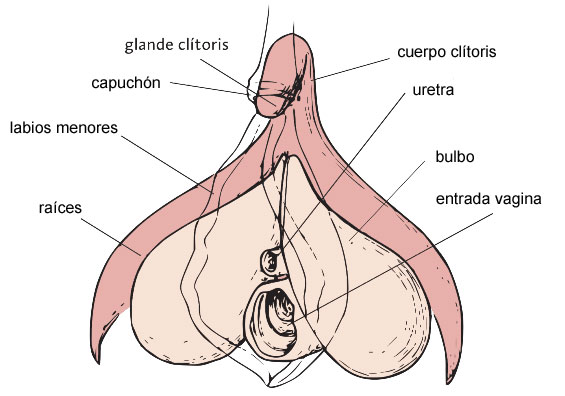 UNAF_Clitoris